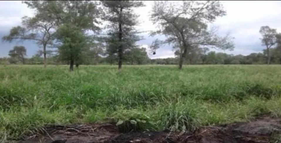 Vendo campo Ganadero 2500ha, Pcia. El Chaco