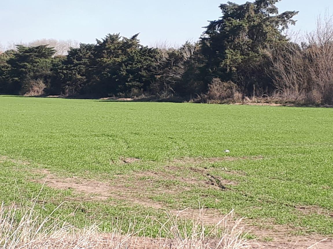 Vendo Campo 20 ha RN9 Lima , Partido de Zárate