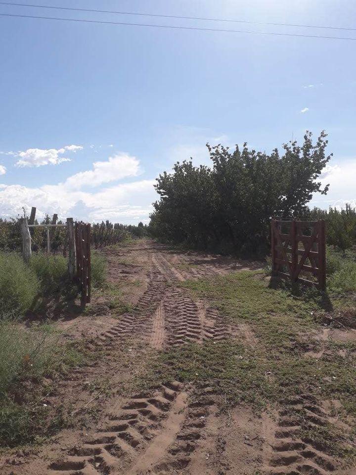 Vendo Finca 4 has en Gral. Alvear, Pcia. Mendoza