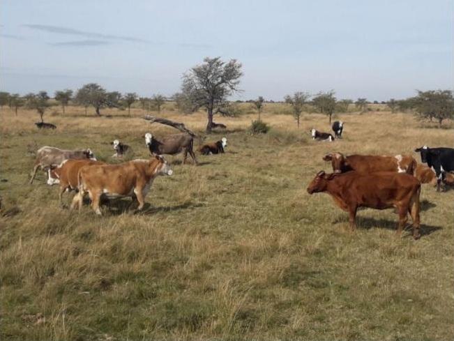 Vendo 2000 has ganaderas en Huanqueros, Santa Fe