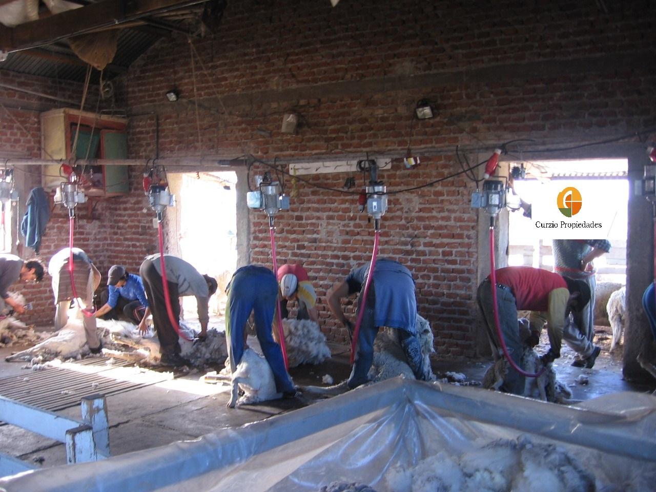 Vendo campo ganadero 25.000 has, en Chubut