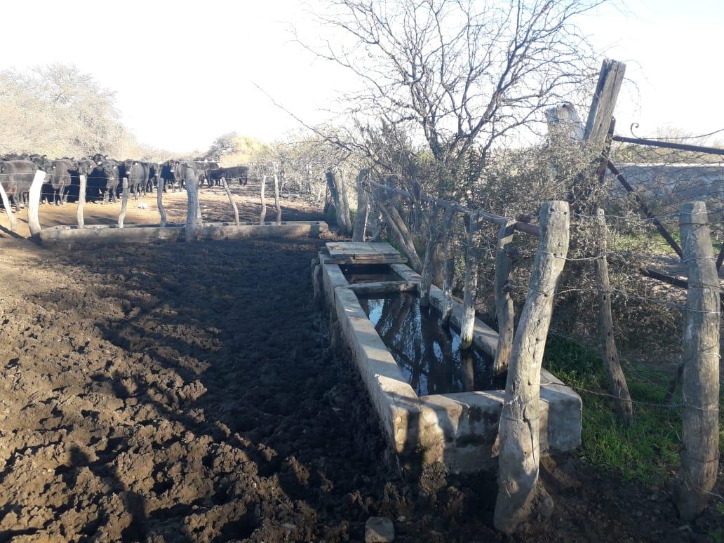 Vendo 2600 has ganaderas en Lihuel Calel, La Pampa